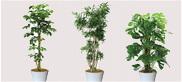 観葉植物・鉢カタログ