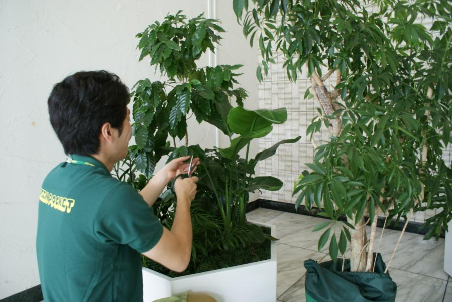 ランニングコストを抑えたい・自分で買った植物のメンテナンスをして欲しい、と言ったご要望にお答えします。