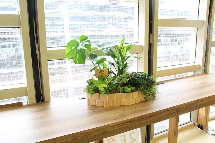 机の上に「小さな森」 グリーバ・ミニ